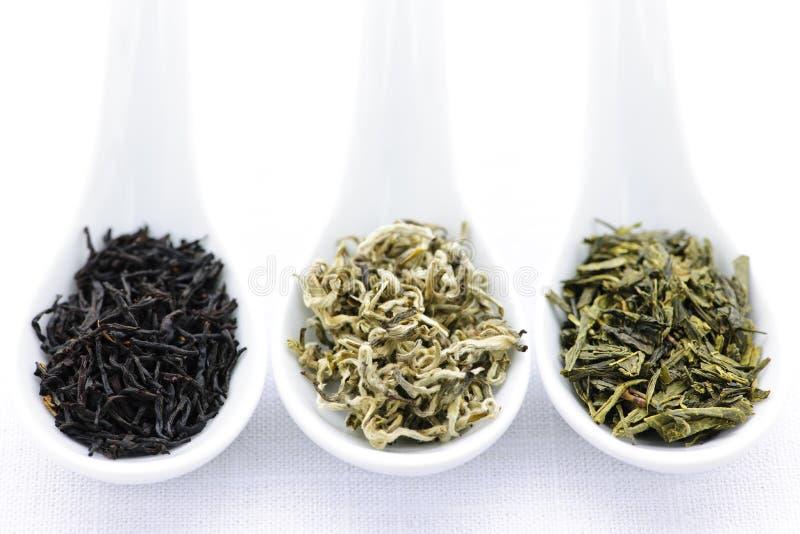 asortymentu suche liść łyżki herbaciane obrazy royalty free