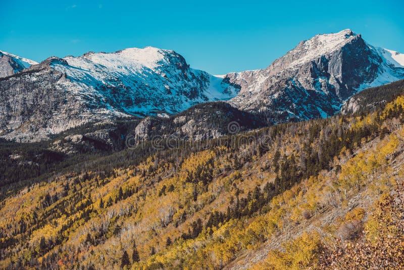 Asp- dunge på hösten i Rocky Mountains royaltyfri bild