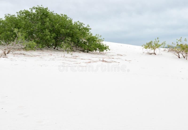 Asp på de vita sanderna royaltyfri bild