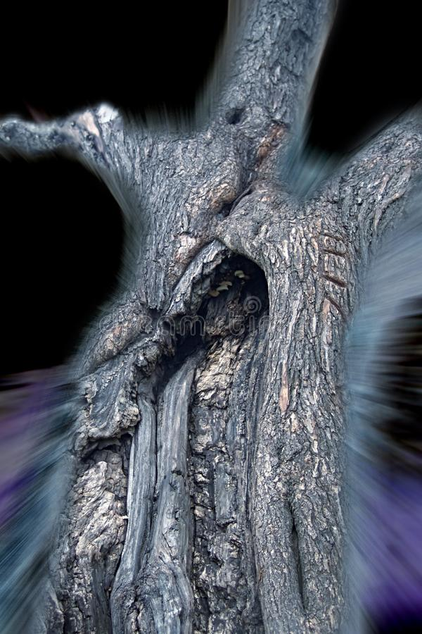 Asp Spookytree.jpg Stock Photography