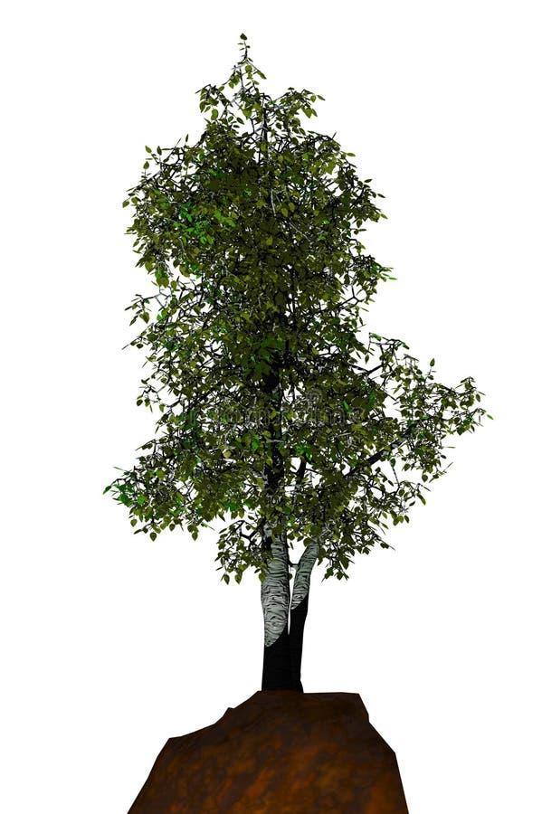asp- trees stock illustrationer
