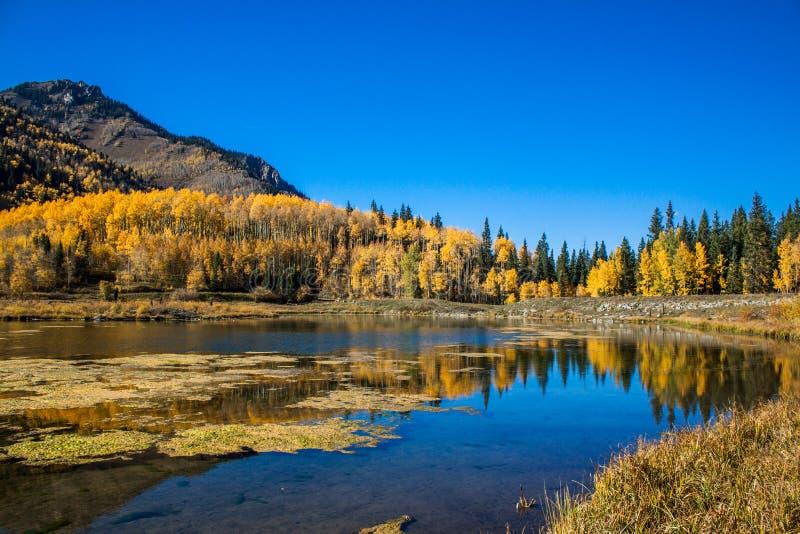 Aspar i nedgångfärger reflekterar i en sjö royaltyfria foton