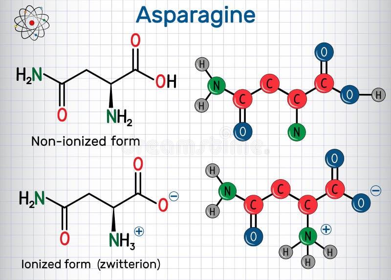 AsparagineL-asparagine, Asn, n-aminosyramolekyl Joniserade och icke-joniserade zwitterionformer strukturell kemisk formel royaltyfri illustrationer