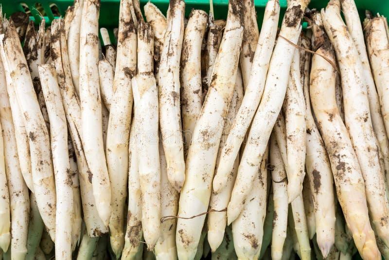 asparago bianco del raccolto dal campo immagini stock