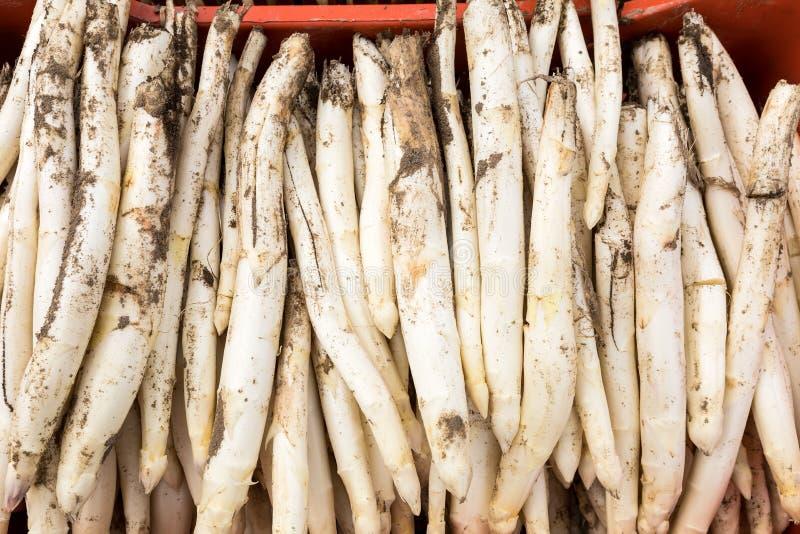 asparago bianco del raccolto dal campo immagini stock libere da diritti