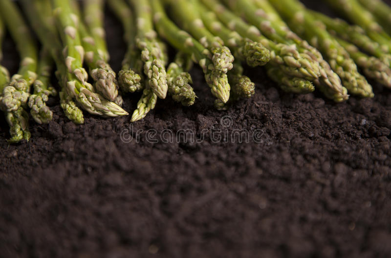 Asparago organico in una riga immagini stock