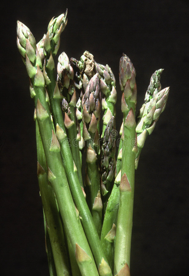 asparagusów łodygi obraz royalty free