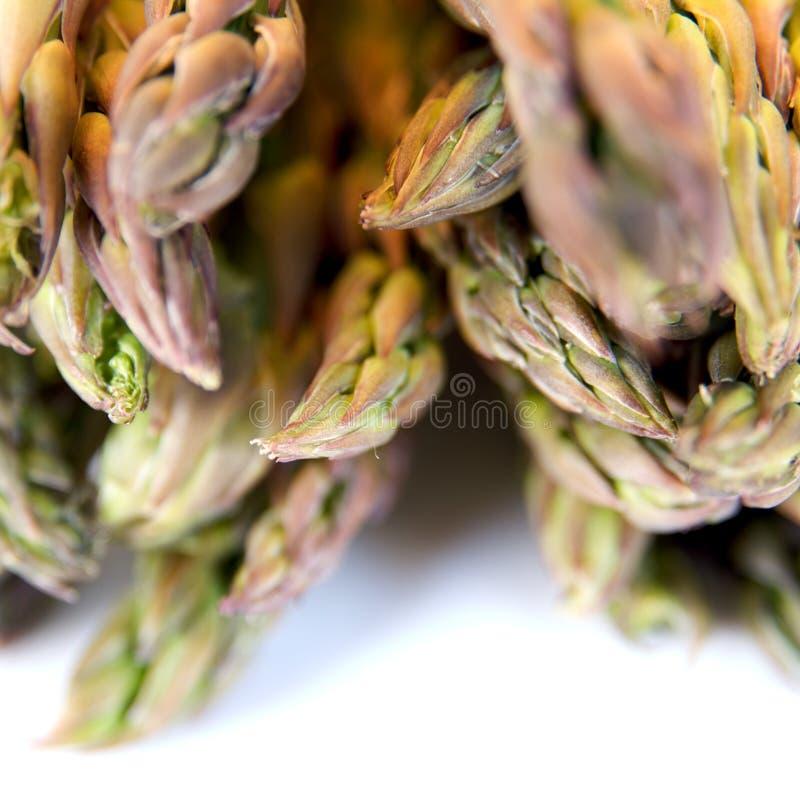 Free Asparagus Stock Photo - 13687340