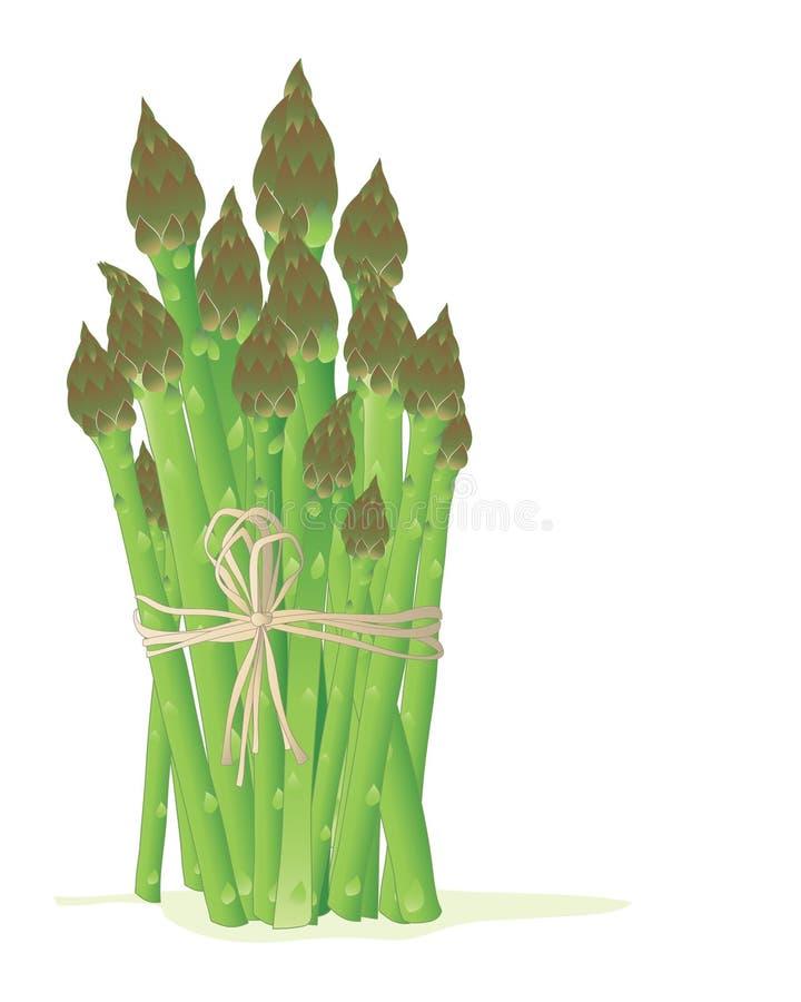 Download Asparagus bundle stock vector. Image of white, ingredient - 24155552