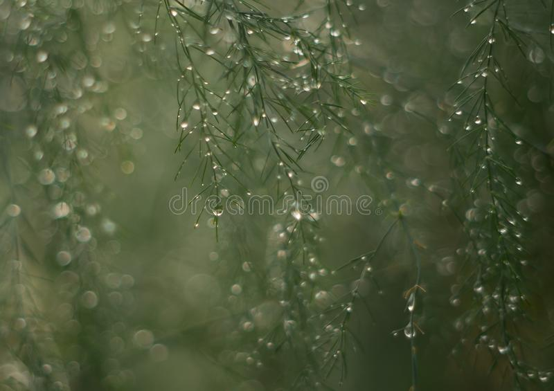 Asparagus after a heavy rain fall royalty free stock images