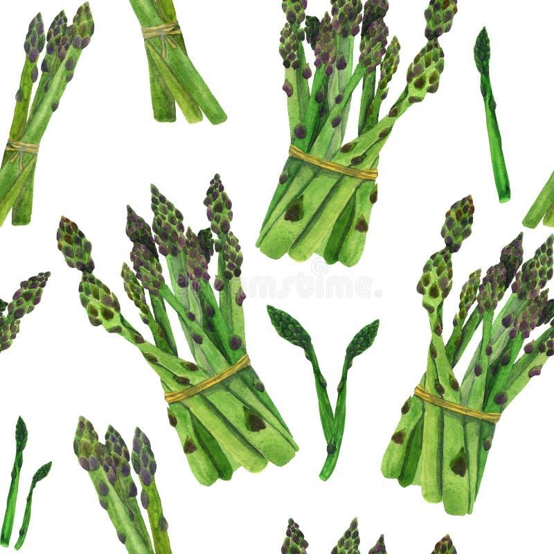 Asparagus kiełkuje na białym tło akwareli wzorze royalty ilustracja