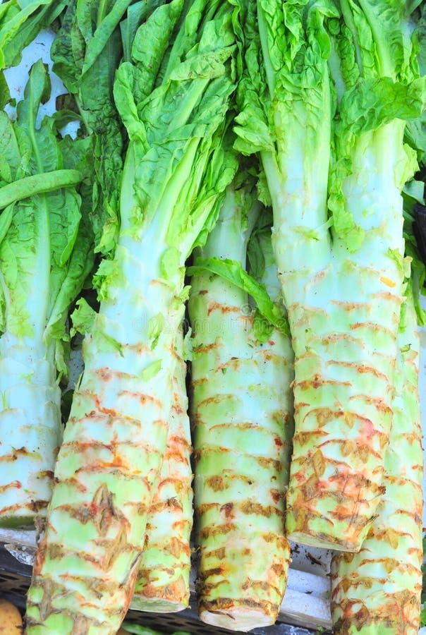 Asparagus lettuce royalty free stock photography