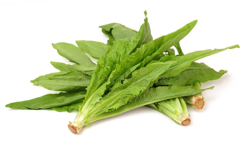Asparagus lettuce leaf stock photo