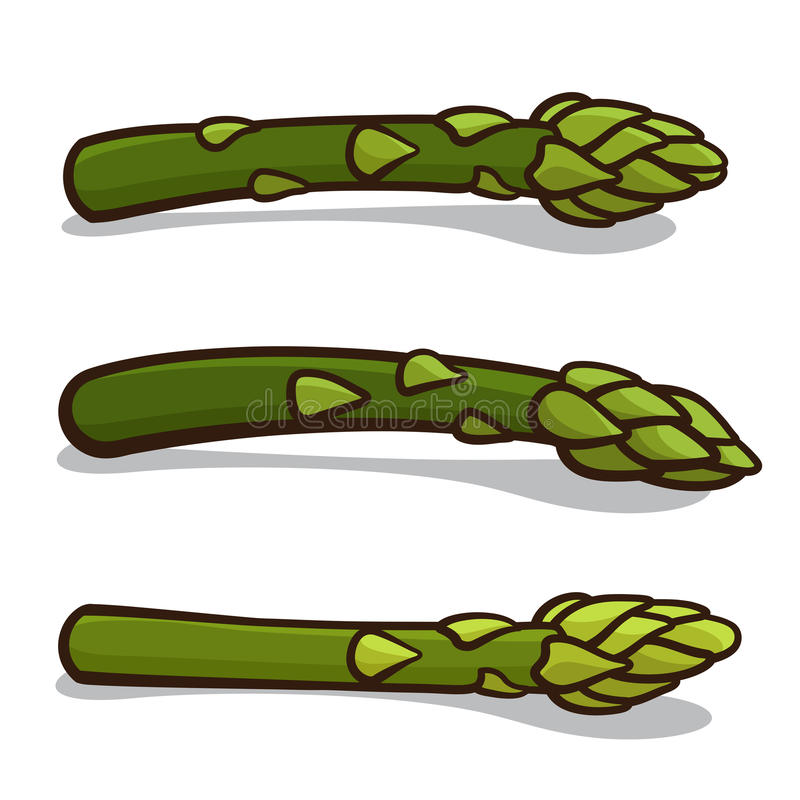 Asparagus royalty free illustration