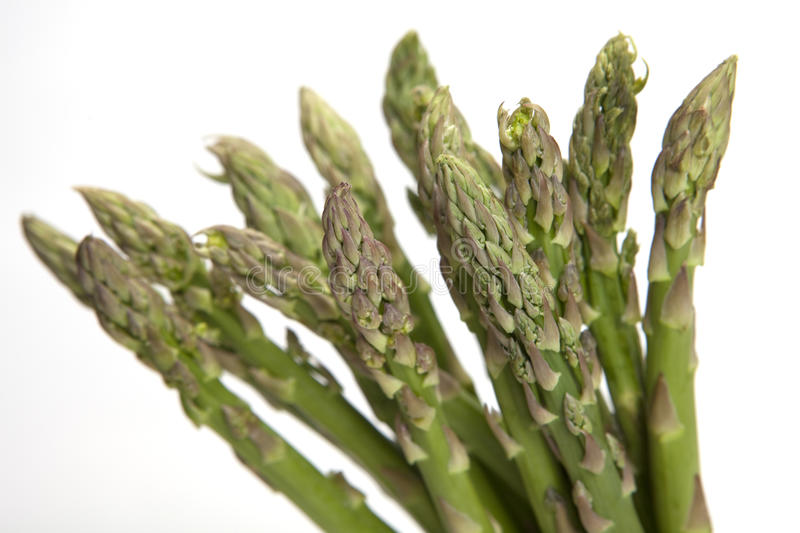 Asparagus on White Background royalty free stock photo