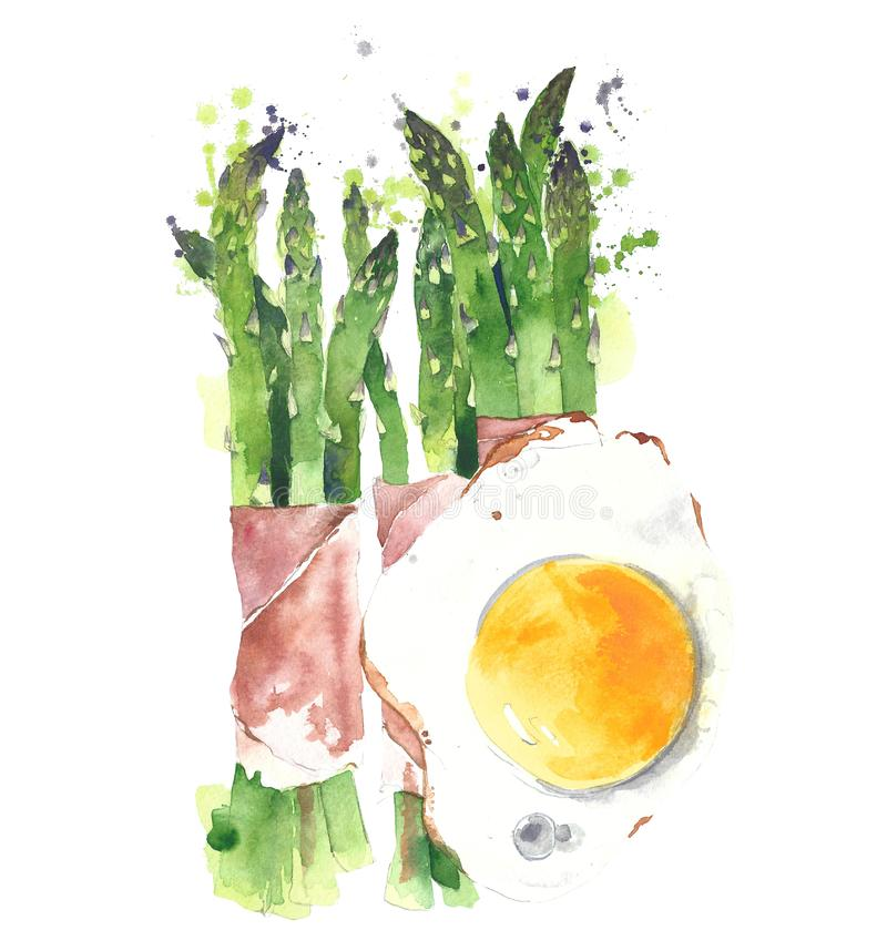 Asparagus wrapped in prosciutto with fried egg watercolor painting illustration isolated on white background vector illustration