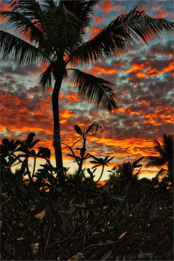 Aspect tropical de portrait de lever de soleil images libres de droits