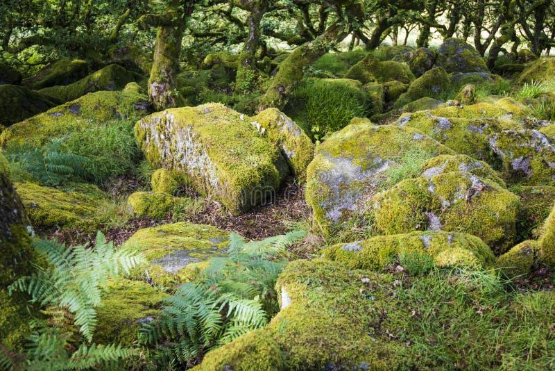 Aspecten van het Hout van Wistman ` s - een oud landschap op Dartmoor, Devon, Engeland royalty-vrije stock fotografie