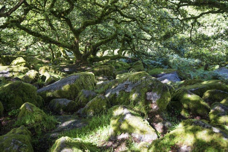 Aspectos de la madera del ` s de Wistman - un paisaje antiguo en Dartmoor, Devon, Inglaterra imagen de archivo