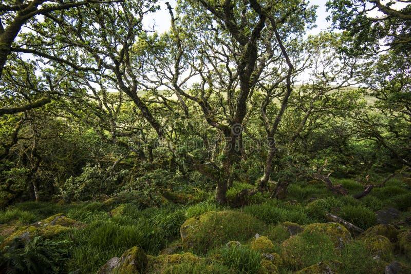 Aspectos de la madera del ` s de Wistman - un paisaje antiguo en Dartmoor, Devon, Inglaterra fotos de archivo libres de regalías