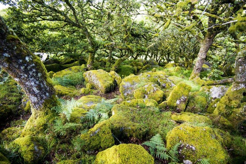Aspectos de la madera del ` s de Wistman - un paisaje antiguo en Dartmoor, Devon, Inglaterra foto de archivo