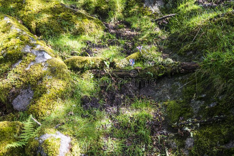 Aspectos de la madera del ` s de Wistman - un paisaje antiguo en Dartmoor, Devon, Inglaterra imágenes de archivo libres de regalías