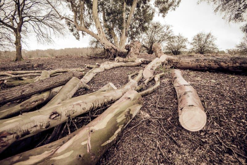 Aspekte der Forstwirtschaft in Süd-England stockbild