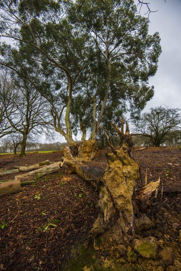 Aspekte der Forstwirtschaft in Süd-England stockbilder