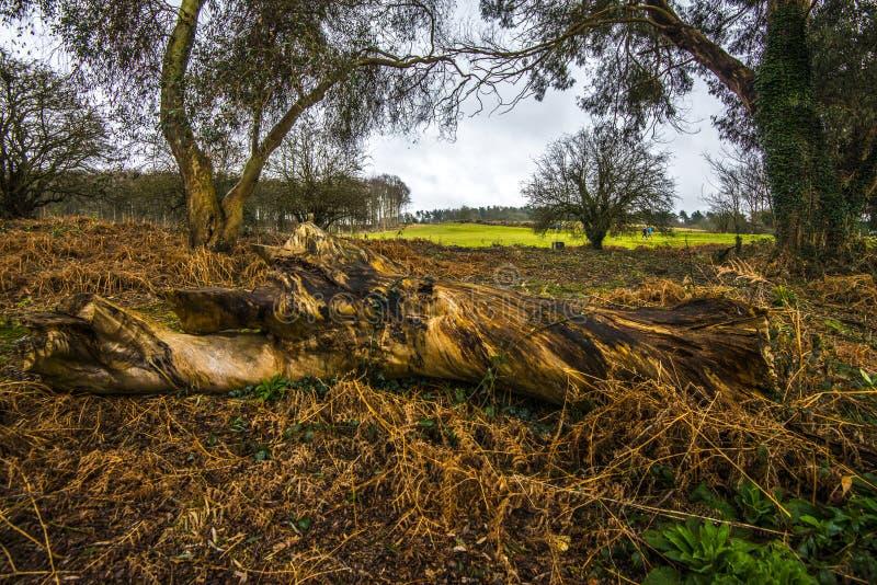 Aspekte der Forstwirtschaft in Süd-England lizenzfreies stockfoto