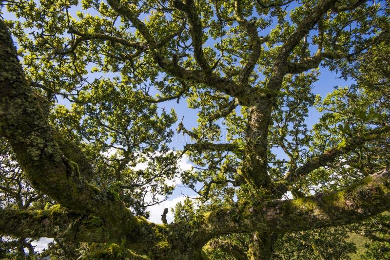Aspekty Wistman ` s drewno - antyczny krajobraz na Dartmoor, Devon, Anglia fotografia royalty free