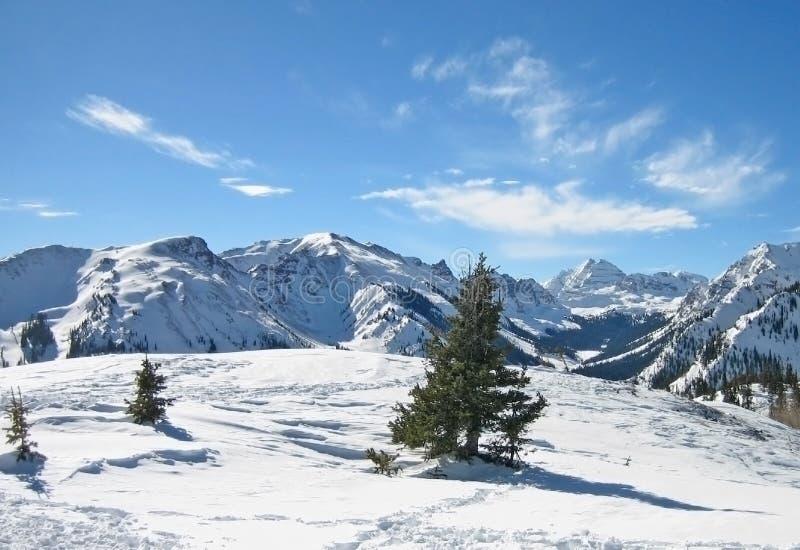 Aspen photo stock