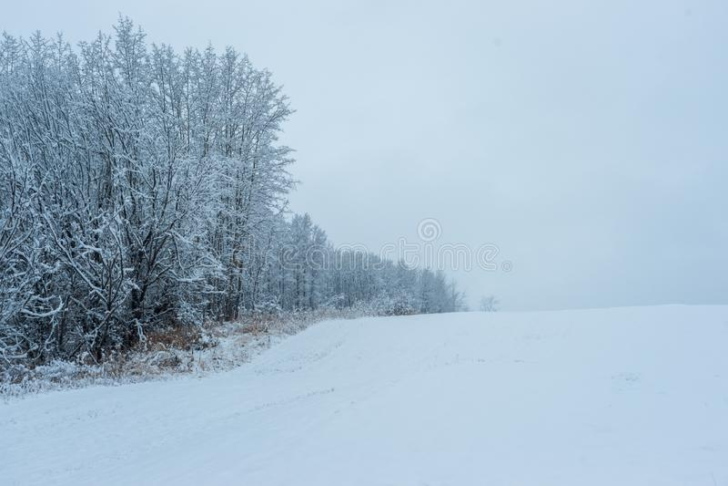 Aspen Clone - primeira neve na borda foto de stock royalty free