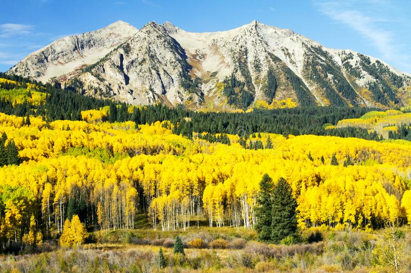 Aspen d'or dans le haut pays du Colorado photo stock