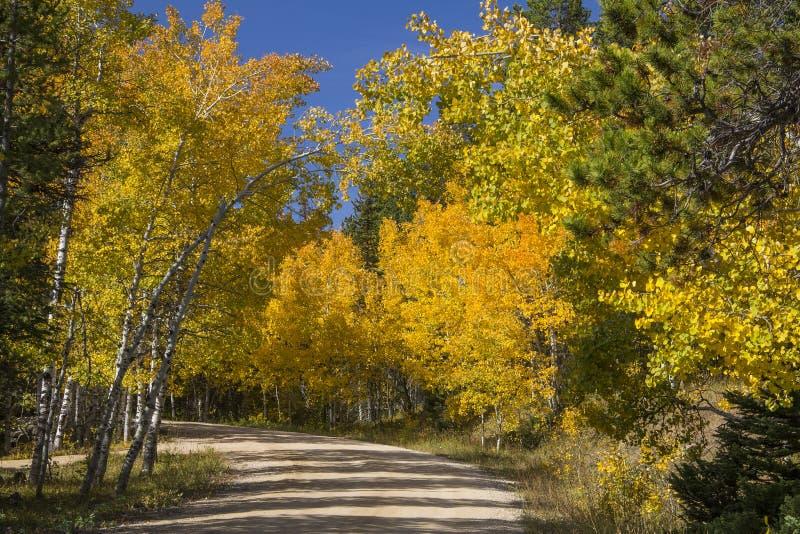 Aspen dourada em Casper Mountain Wyoming fotos de stock
