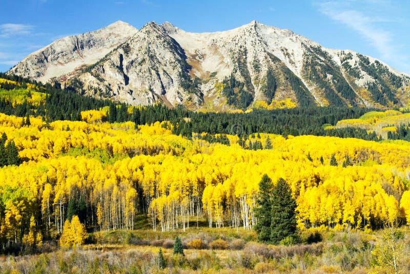Aspen dourada no país alto de Colorado foto de stock