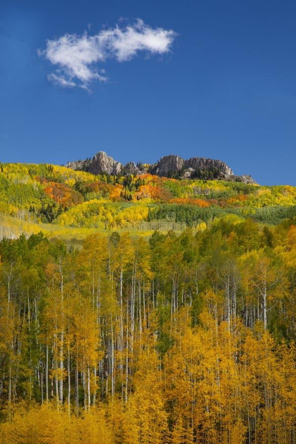 Aspen drzewa jesienią na przełęczy Kebler w pobliżu Crested Butte Colorado America Liść Aspensa zmienia kolor z zielonego na żółt obraz royalty free