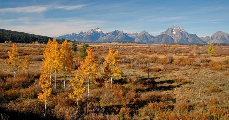 Aspen en automne, Wyoming, Etats-Unis photos libres de droits