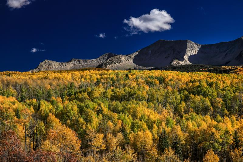 Aspen forest and mountain views. This photo was taken in the Kebler Pass in Colorado. Beautiful Aspen forest and mountain views in stock images