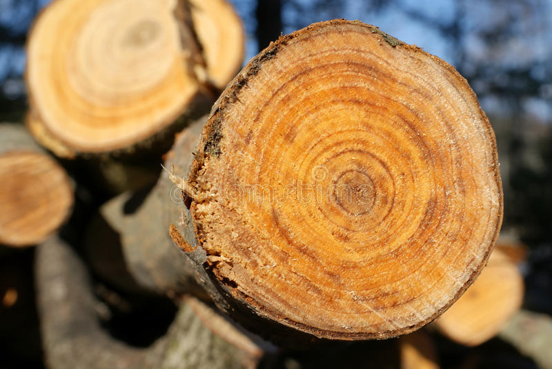 Aspen Growth Rings stock images