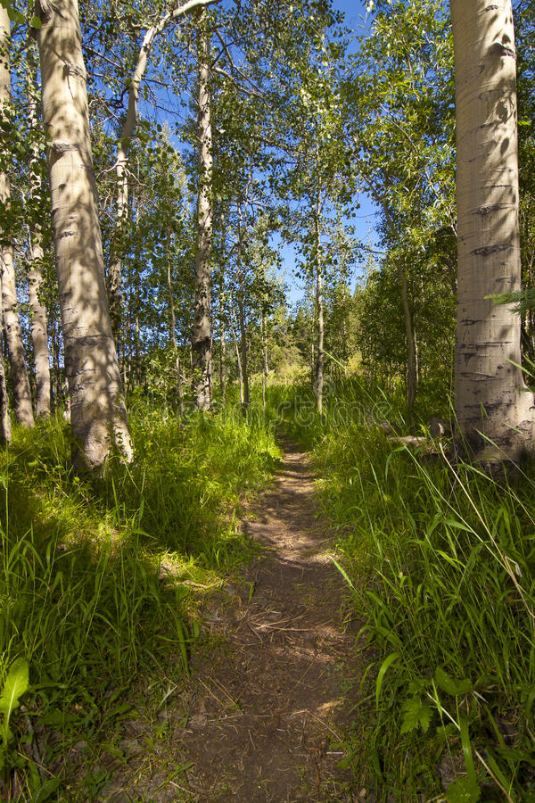 Download Aspen Hiking Trail stock photo. Image of spooner, recreation - 26318772