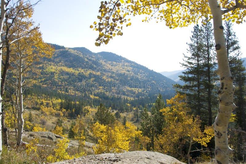 Aspen Hillside royalty-vrije stock afbeelding
