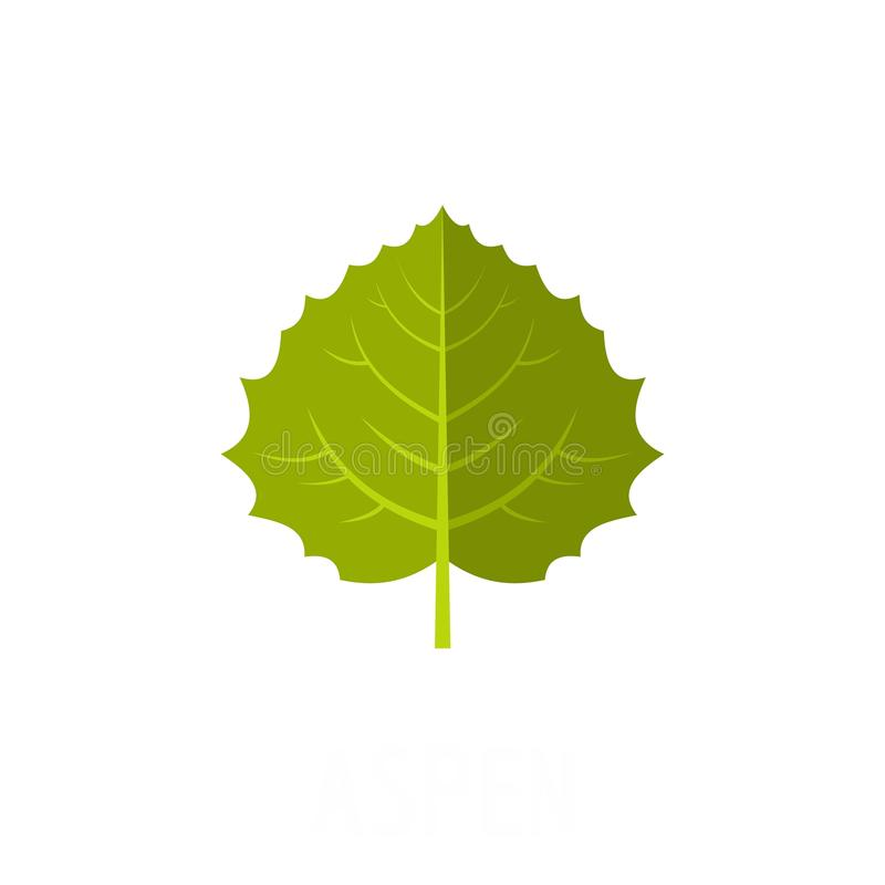 Aspen leaf icon, flat style. Aspen leaf icon. Flat illustration of aspen leaf vector icon isolated on white background vector illustration