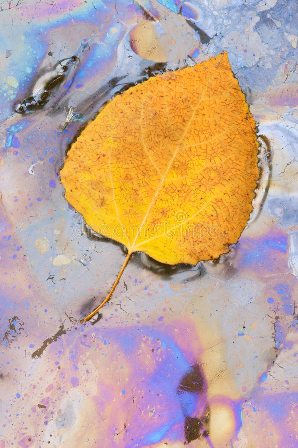 Aspen Leaf and Plant Oils royalty free stock photos