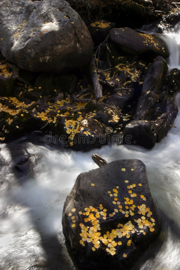 Aspen Leaves On Shore In Fall Royalty Free Stock Photos