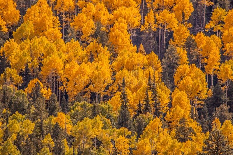 Aspen Mountain fotografía de archivo libre de regalías