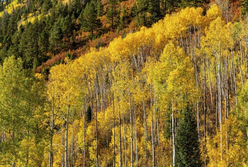 Aspen Mountainside na przełęczy McClure fotografia stock