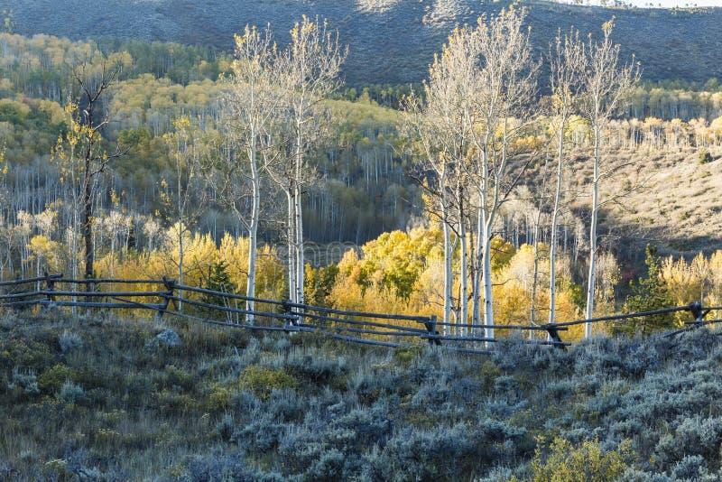 Aspen Ridge et barrière en bois photographie stock