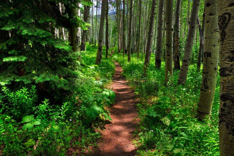 Aspen Trail stockfotografie
