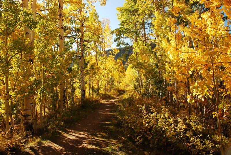 Aspen Trail fotografia stock libera da diritti