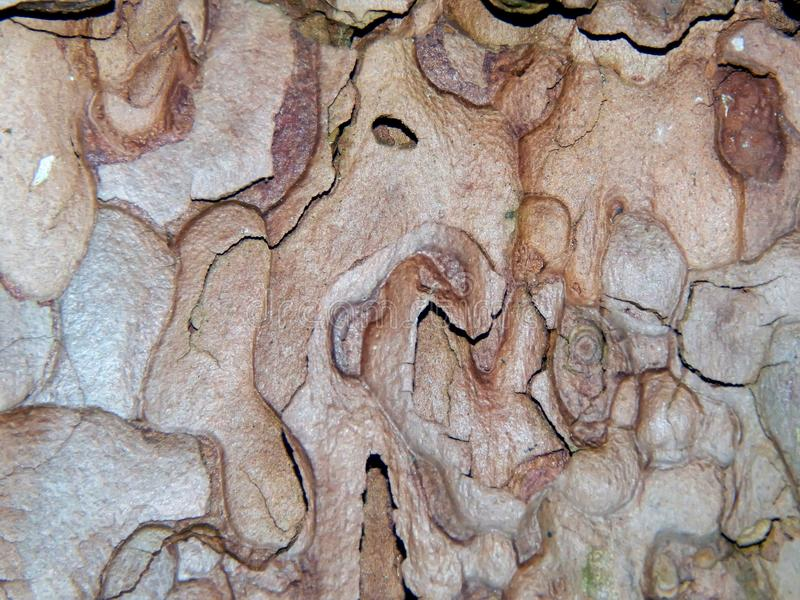 Aspen Tree Bark imagen de archivo libre de regalías